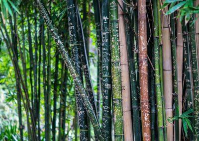 bamboo-142635_1280