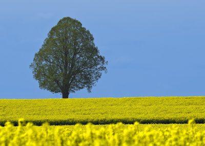 tree-2147010_1280